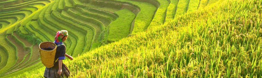 Ue e Vietnam: siglato protocollo d'intesa ma il riso è un problema