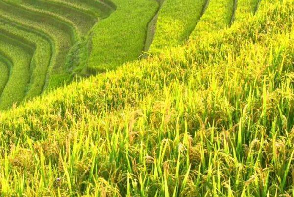 Vietnam, da agosto si esporta con REX